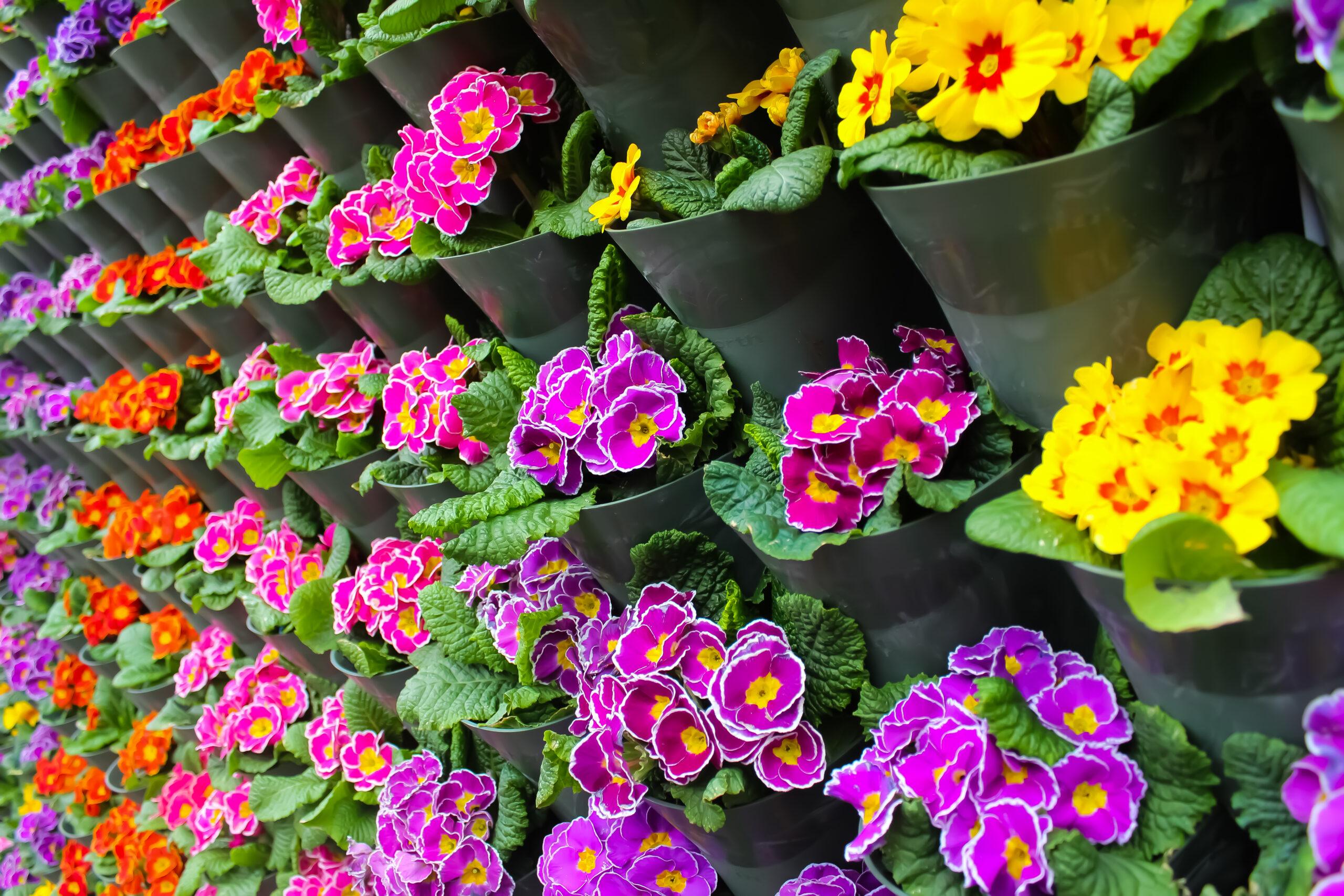 Colourful fresh flowers