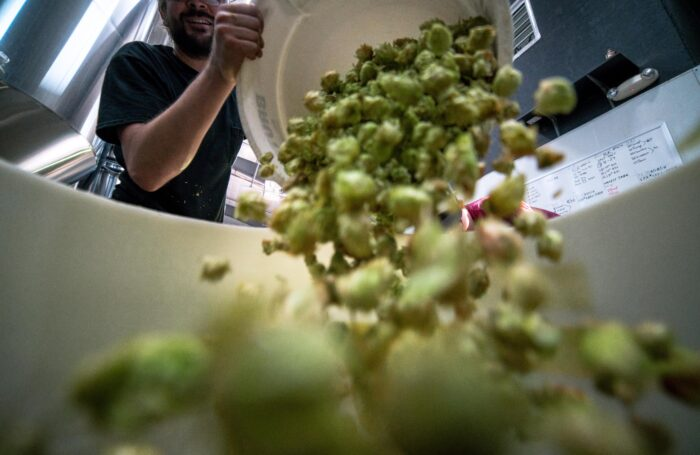Man pouring hops