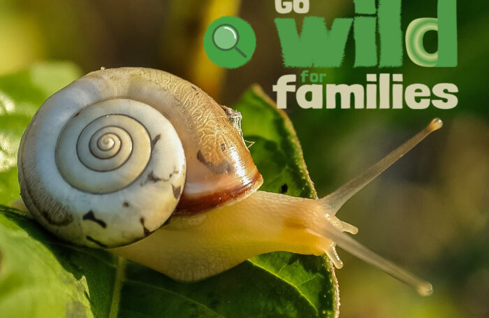 New online hub of nature-inspired resources for families