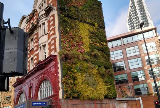 Why Do We Need Green Walls?