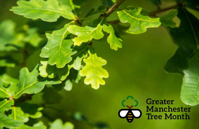 Join us for Greater Manchester Tree Month!