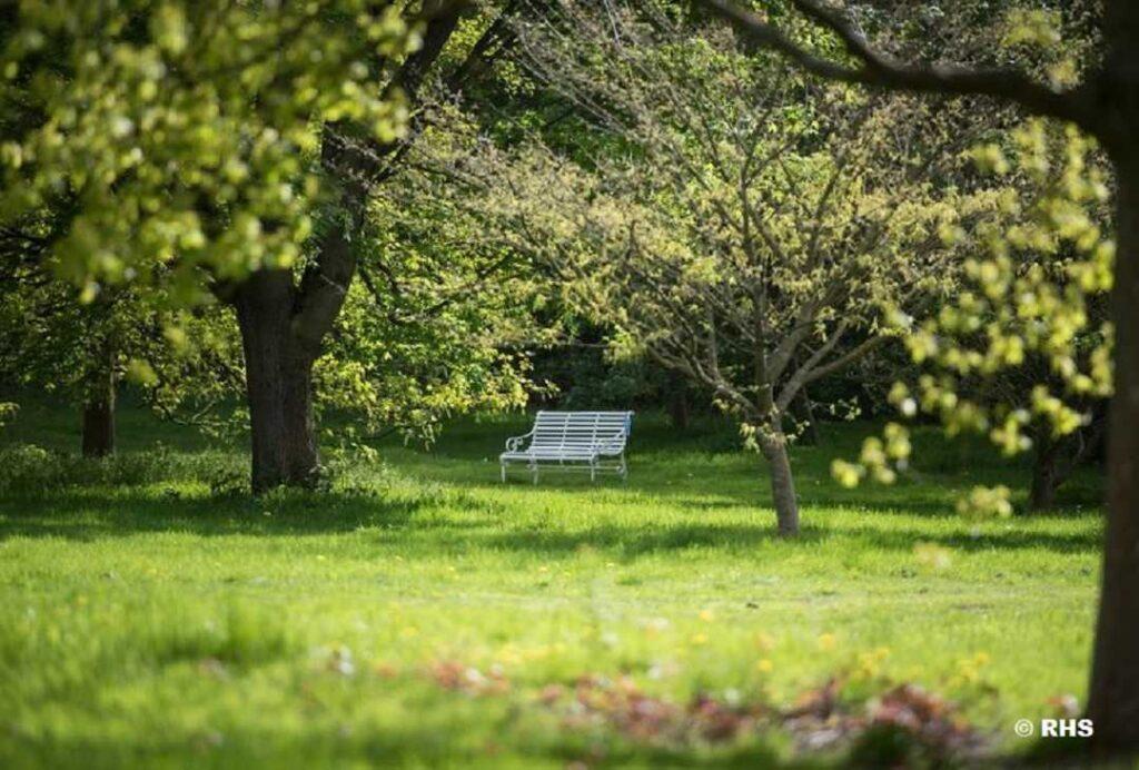 White bench amongst trees