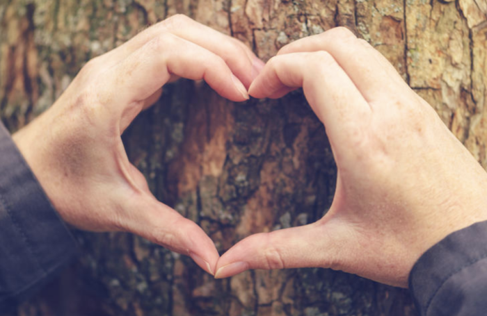 Heart shaped hands against trees