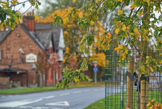 Greater Manchester to Invest Over £1.5million in New Tree Planting