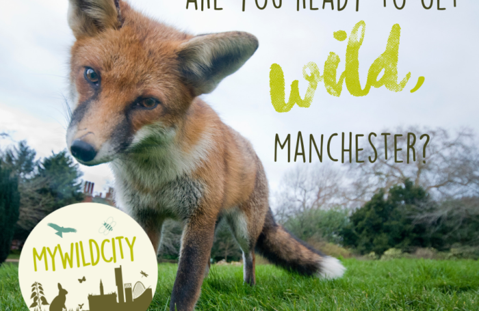 Discovering Manchester's wild side