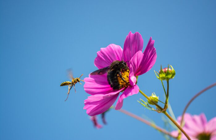 Bee and wasp with pink flower