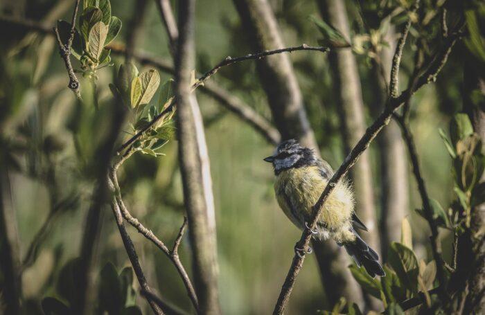 Bird sitting in tree