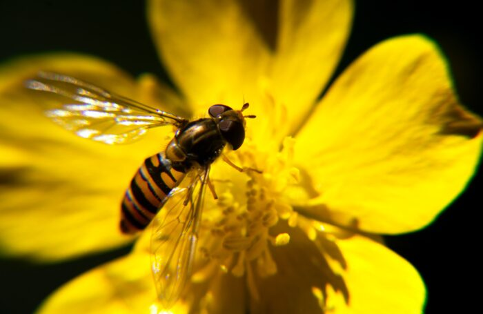 GM to produce city wide biodiversity net gain guidance
