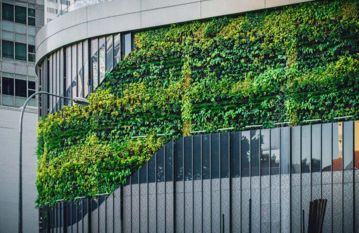Green living wall on modern building