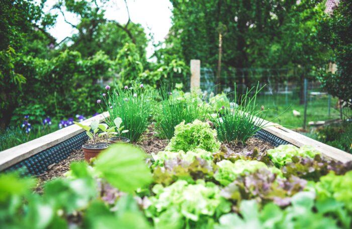 Raised bedding in garden