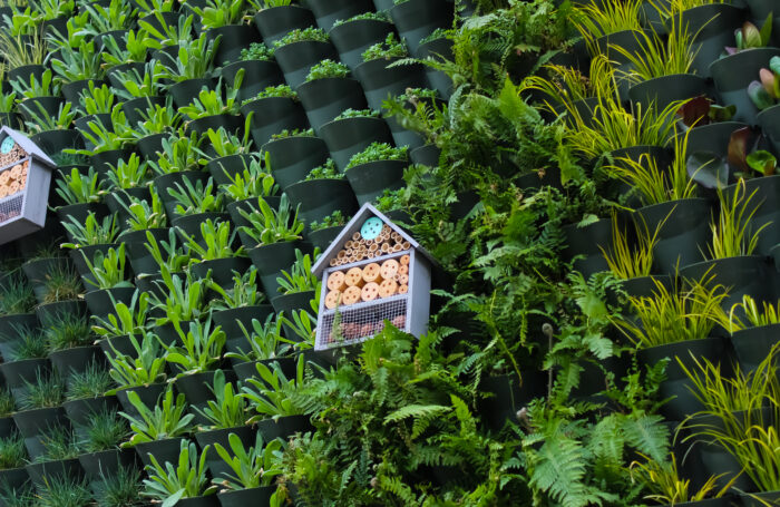 Image of a bird box on a living wall